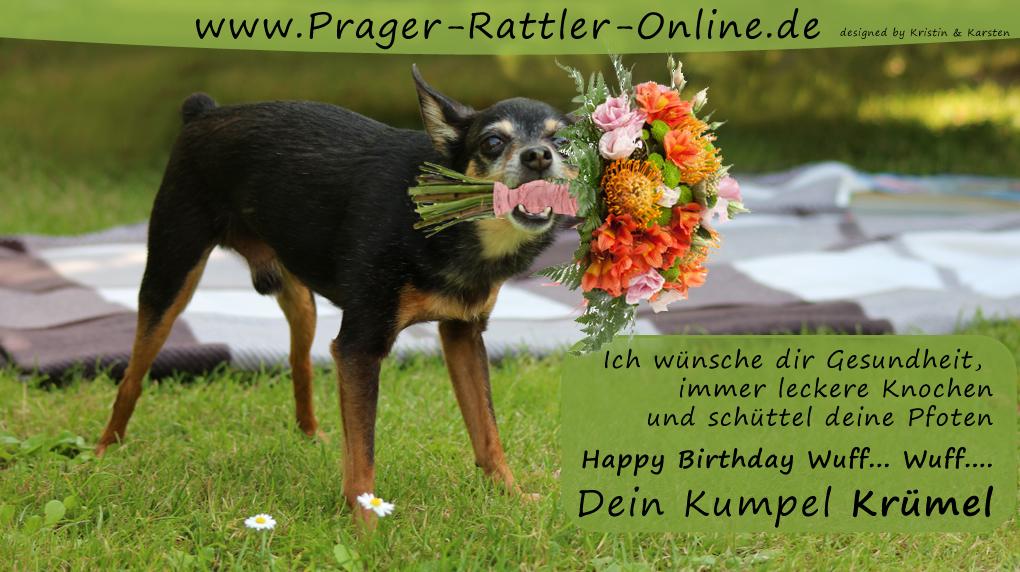 An den Beitrag angehängtes Bild: http://daten.prager-rattler-online.de/bilder/geburtstag2014-tier.jpg